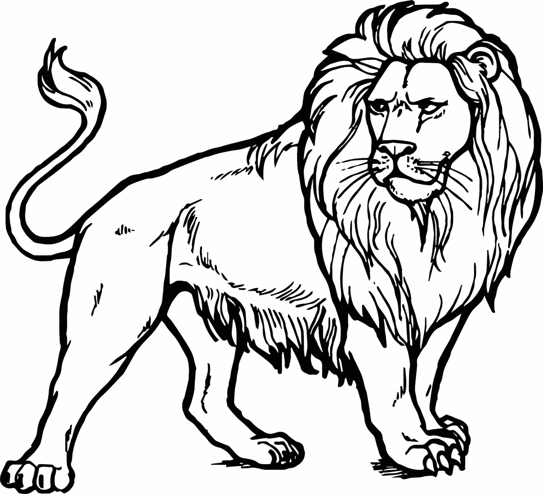 printable pictures of lions lion 15 coloring page supercoloringcom pictures of printable lions