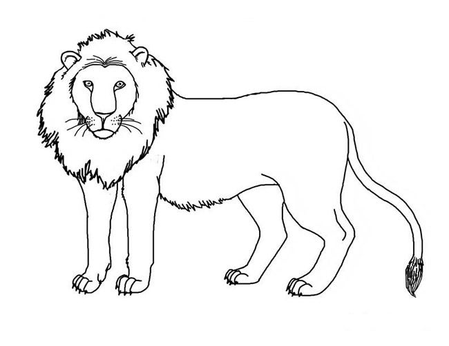 printable pictures of lions lion template animal templates free premium templates pictures of printable lions