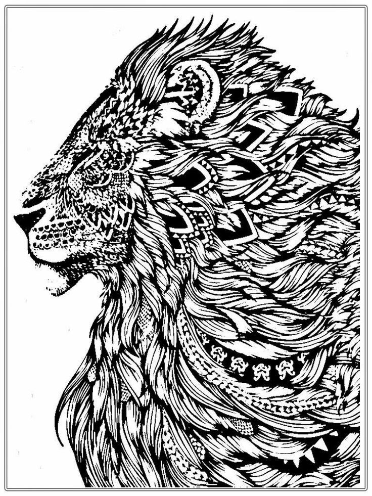 printable pictures of lions realistic lion adult coloring pages free lion coloring of lions printable pictures