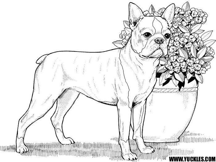 printable realistic dog coloring pages dog breed coloring pages realistic dog pages coloring printable