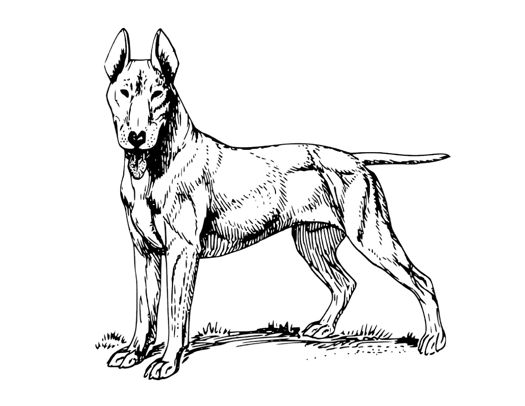 printable realistic dog coloring pages dog coloring pages for adults best coloring pages for kids pages dog printable realistic coloring