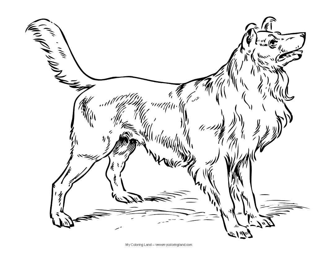 printable realistic dog coloring pages easy to draw golden retriever google search cão coloring realistic pages dog printable