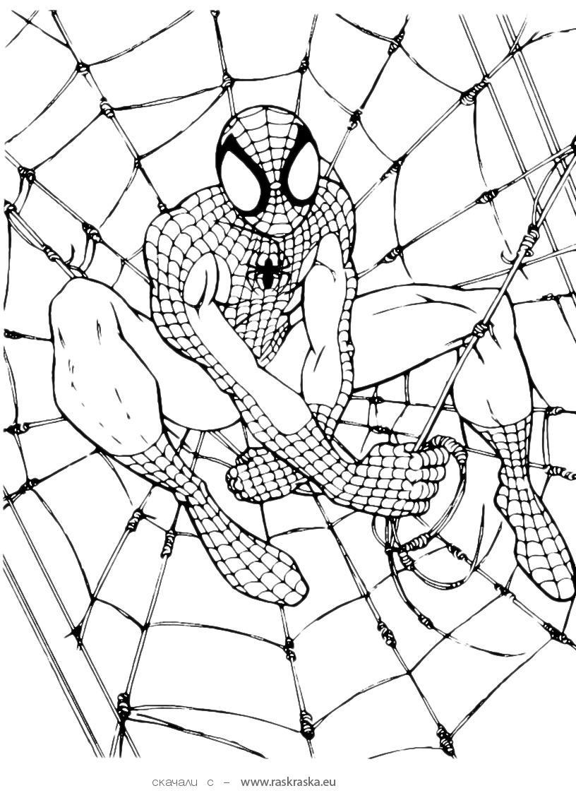 printable spiderman coloring pages spider man coloring pages download and print spider man spiderman pages coloring printable