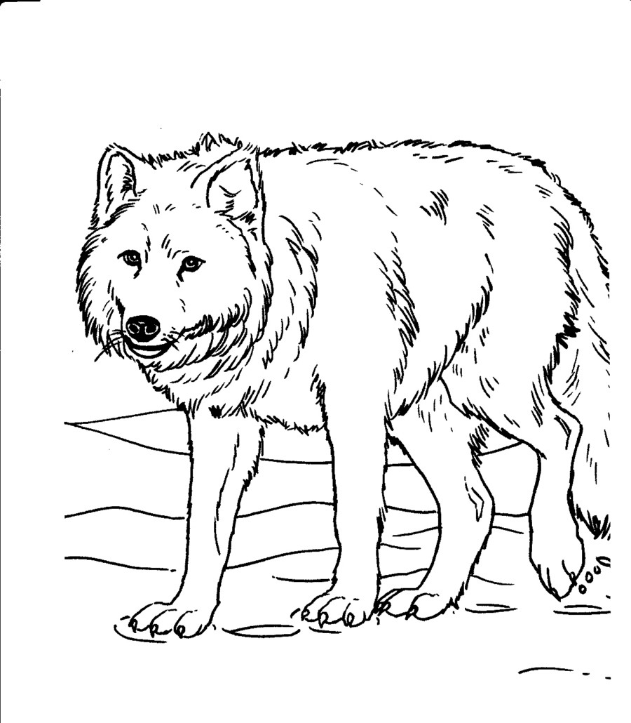 printable wolf coloring pages get this wolf coloring pages for adults free printable 96993 wolf coloring pages printable