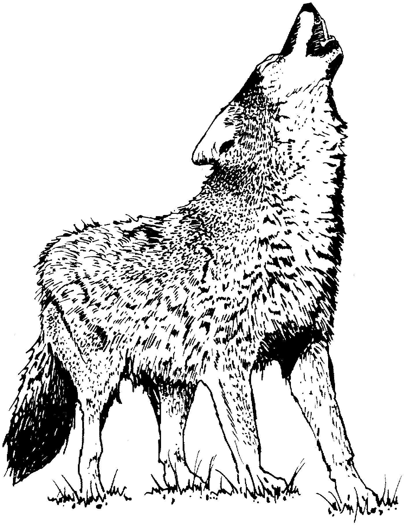 printable wolf coloring pages print download wolf coloring pages theme pages wolf coloring printable