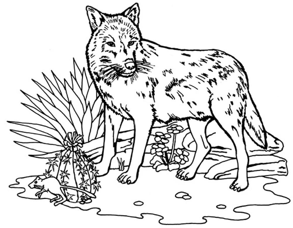 printable wolf coloring pages wolf drawing for kids at getdrawings free download wolf coloring pages printable