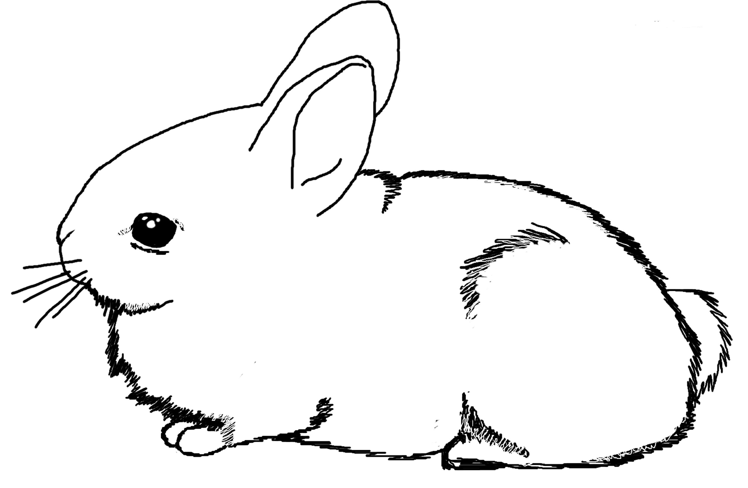 rabbit coloring for kids print out animal rabbit pictures colouring pages for for coloring rabbit kids