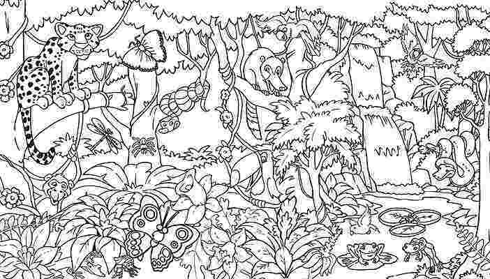 rainforest colouring awesome rainforest pictures graphics scene coloring page rainforest colouring