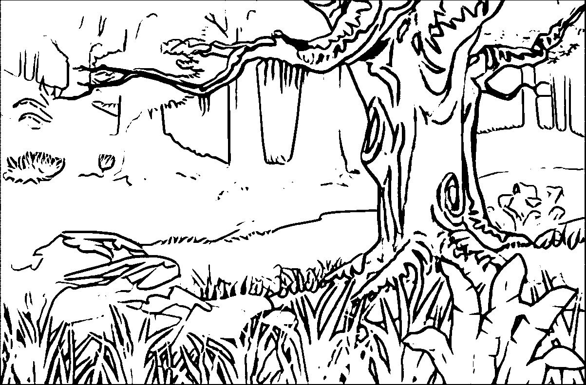 rainforest colouring rain forest coloring pages at getdrawings free download colouring rainforest