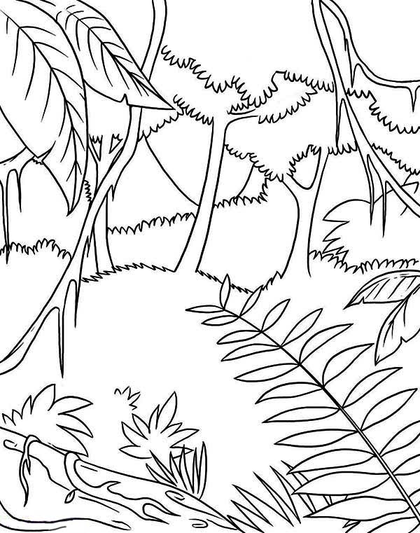 rainforest colouring rainforest coloring pages to download and print for free rainforest colouring