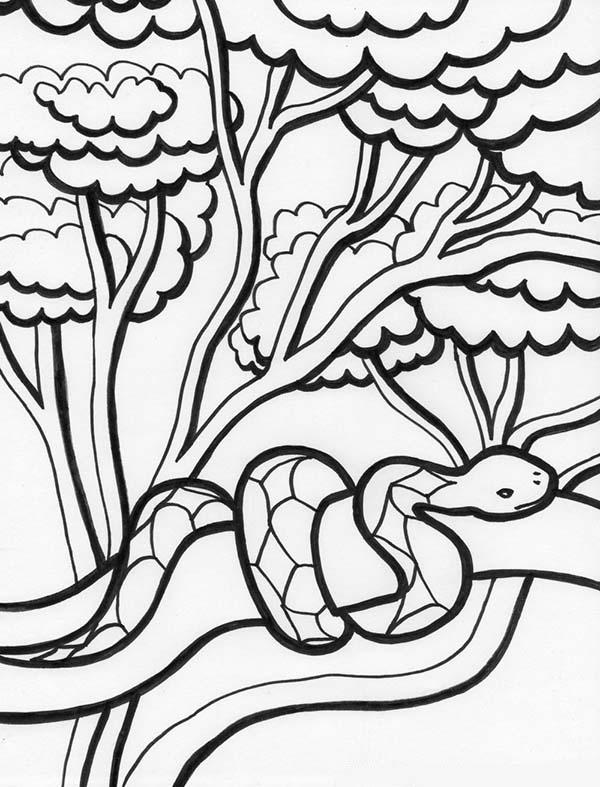 rainforest colouring rainforest drawing easy at getdrawings free download colouring rainforest