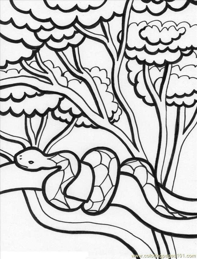 rainforest colouring rainforest drawing for kids at getdrawings free download colouring rainforest