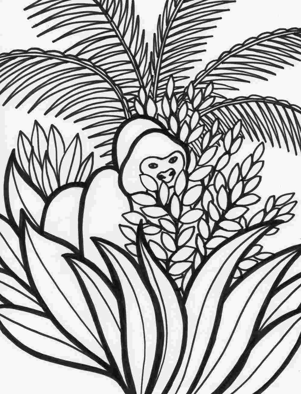 rainforest colouring rainforest drawing for kids at getdrawings free download rainforest colouring