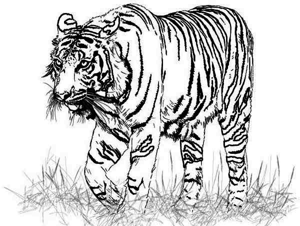 real coloring pages new coloring pages only coloring pages coloring real pages