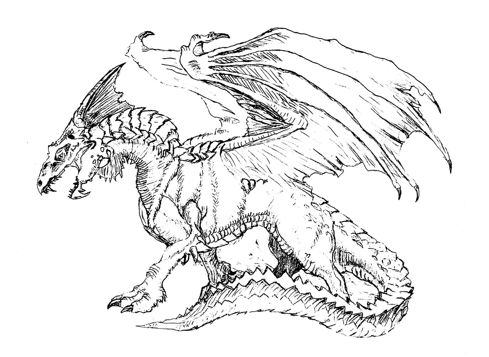 realistic hard dragon coloring pages advanced dragon coloring pages at getdrawings free download pages dragon hard realistic coloring