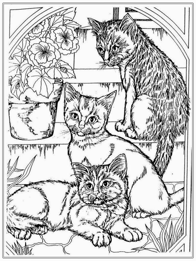 realistic kitten cat coloring pages cat coloring pages for adult realistic coloring pages realistic cat kitten coloring pages