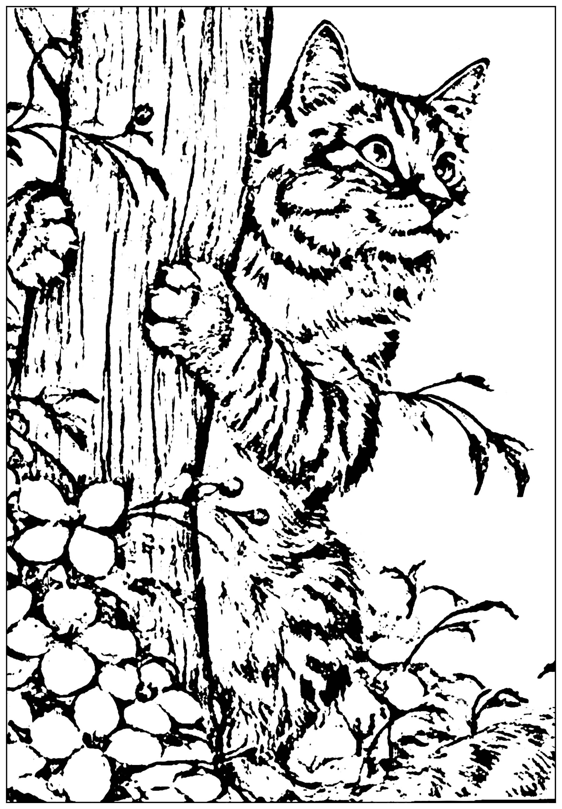 realistic kitten cat coloring pages cat to print created from a picture cats kids coloring pages cat pages realistic coloring kitten