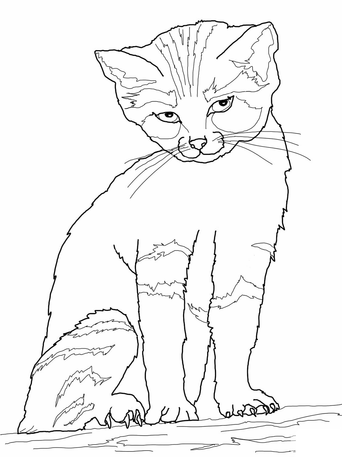 realistic kitten cat coloring pages kittens with n butterflies free coloring pages coloring coloring cat realistic kitten pages