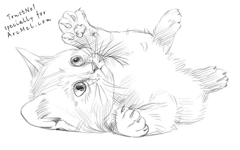 realistic kitten cat coloring pages realistic cat coloring pages kitten realistic cat pages coloring