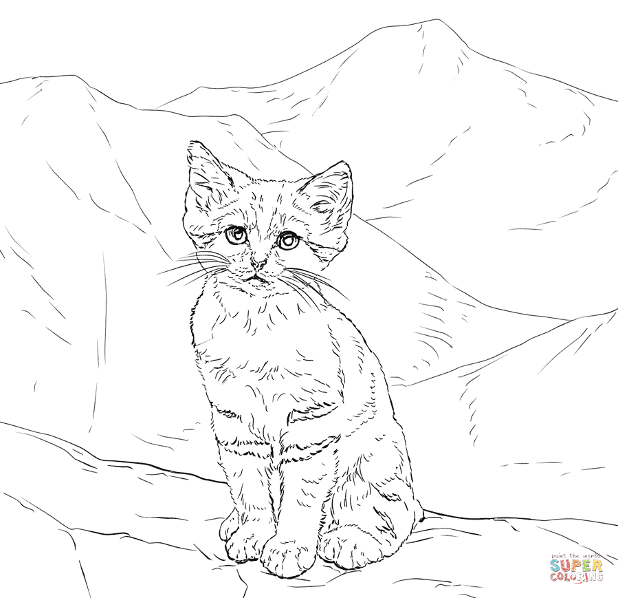 Realistic kitten cat coloring pages