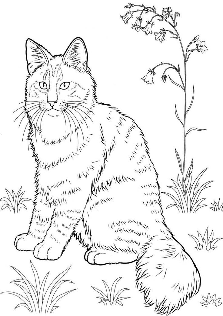 realistic kitten cat coloring pages realistic kitten drawing at getdrawings free download coloring realistic cat pages kitten