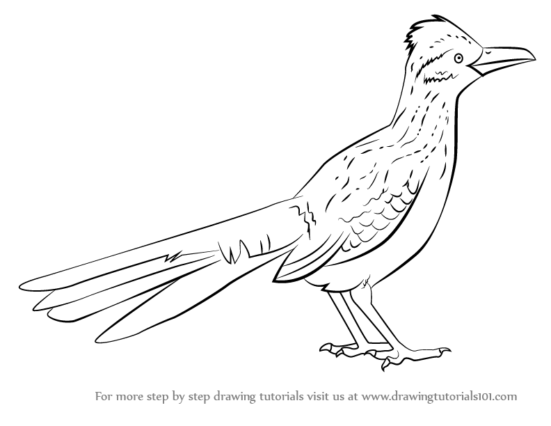 road runner drawing learn how to draw a greater roadrunner birds step by drawing runner road