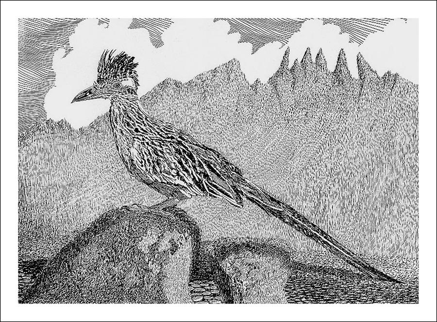 road runner drawing new mexico roadrunner drawing by jack pumphrey drawing runner road