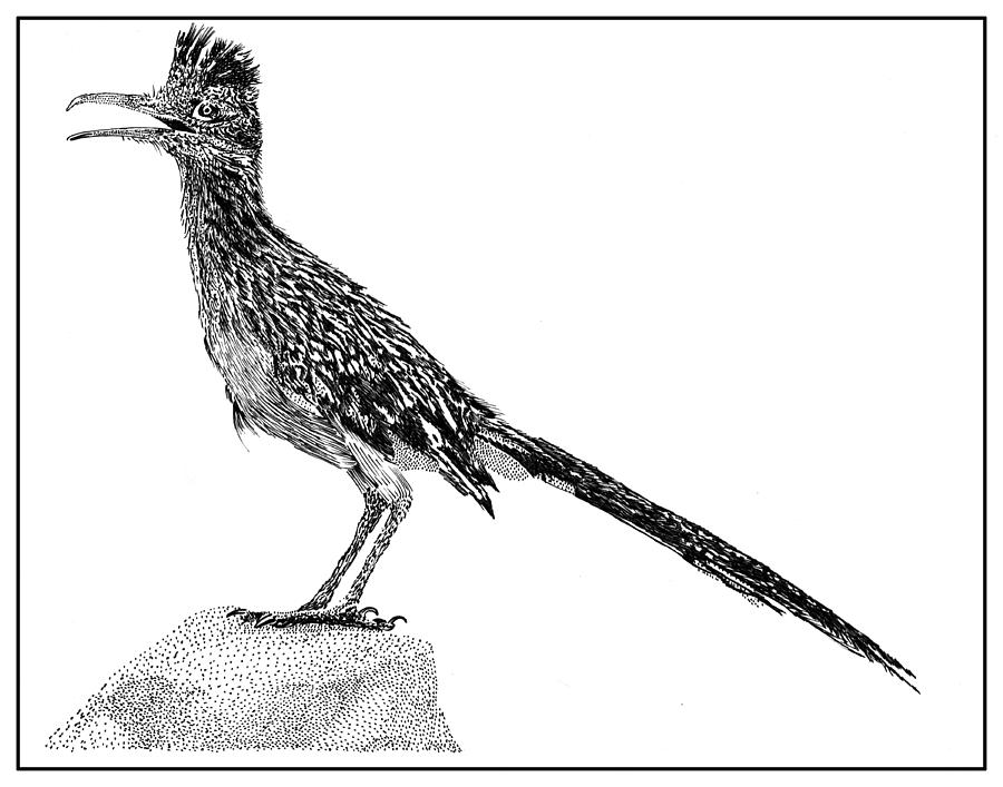 road runner drawing roadrunner clipart black and white 20 free cliparts road drawing runner