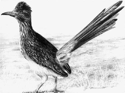 road runner drawing roadrunner state bird of new mexico drawing by georgann micono runner road drawing