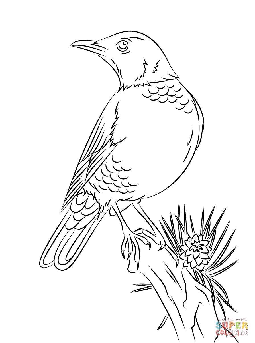 robin coloring sheet robin coloring pages best coloring pages for kids robin sheet coloring