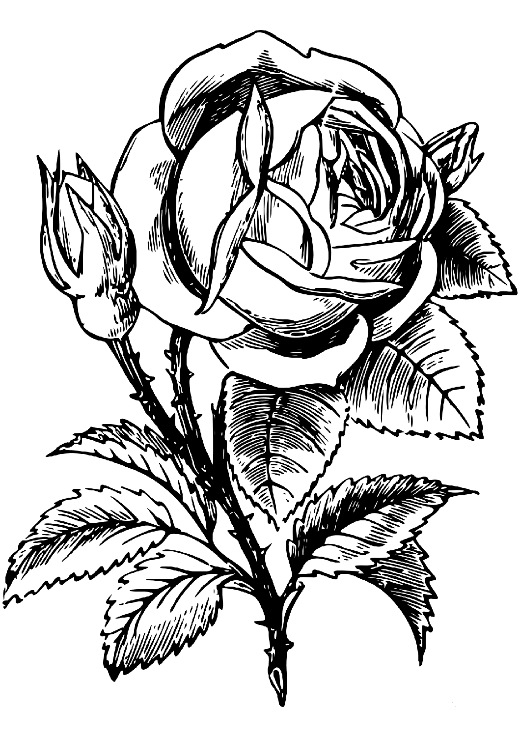 rose coloring page coloring ville rose coloring page