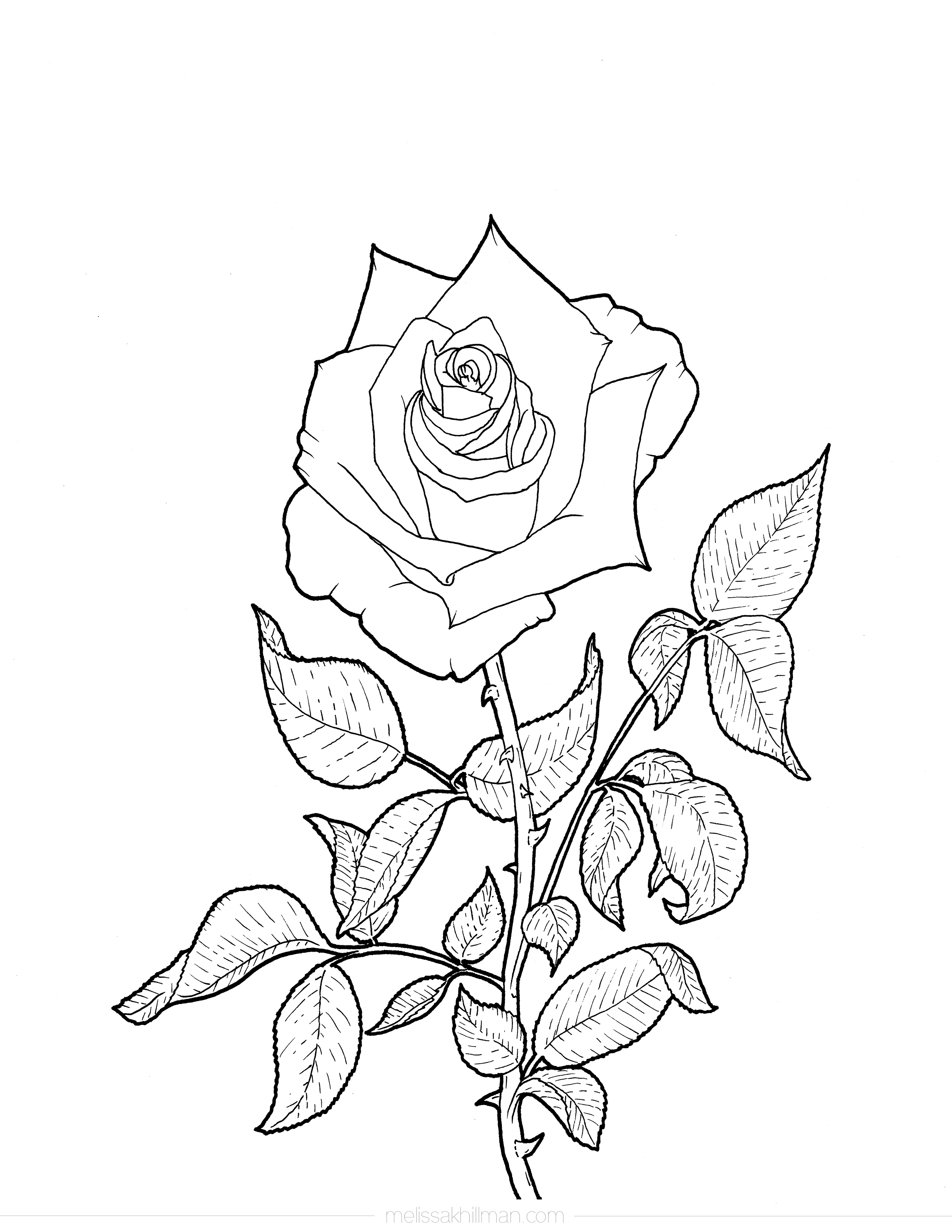 rose coloring page roses coloring pages getcoloringpagescom coloring rose page