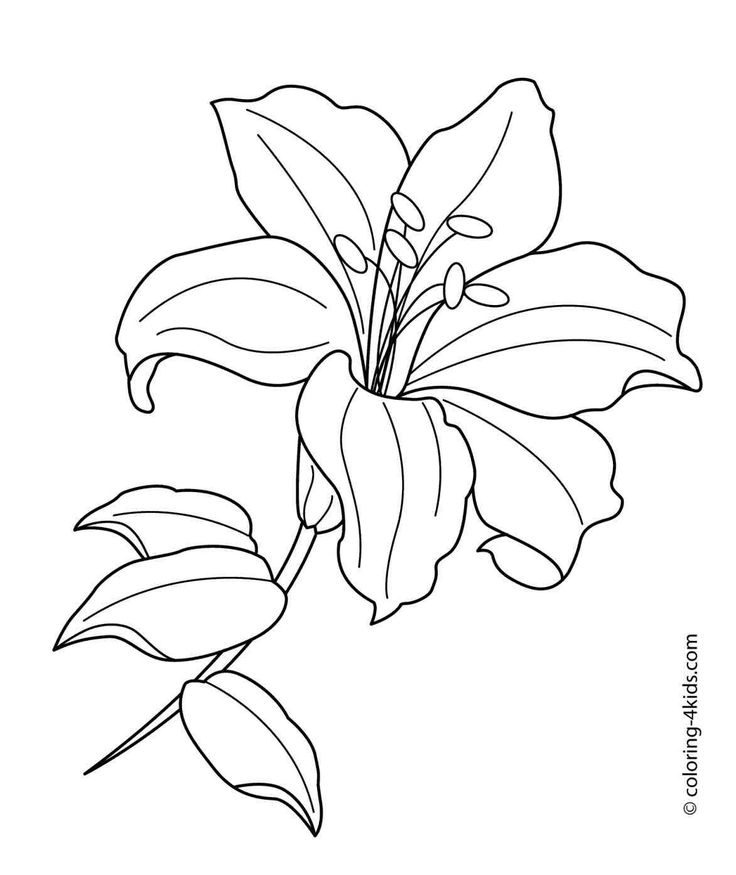 rose coloring sheet flower coloring pages 1172x1394 pages free roses realistic rose line drawing sheet coloring coloring flower pages rose