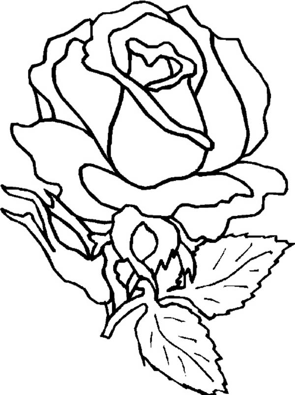 rose coloring sheet flower coloring pages amazing rose flower coloring page download print coloring sheet coloring flower rose pages