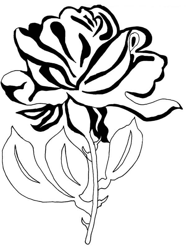 rose coloring sheet flower coloring pages beautiful rose flower for you coloring page netart coloring rose sheet flower coloring pages