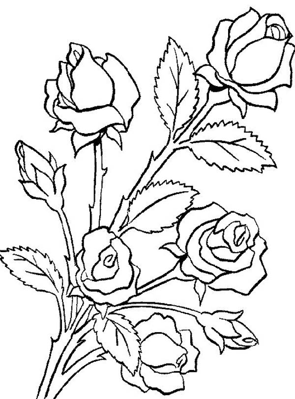 rose coloring sheet flower coloring pages flower bouquet is made of roses coloring page color luna sheet coloring flower pages coloring rose