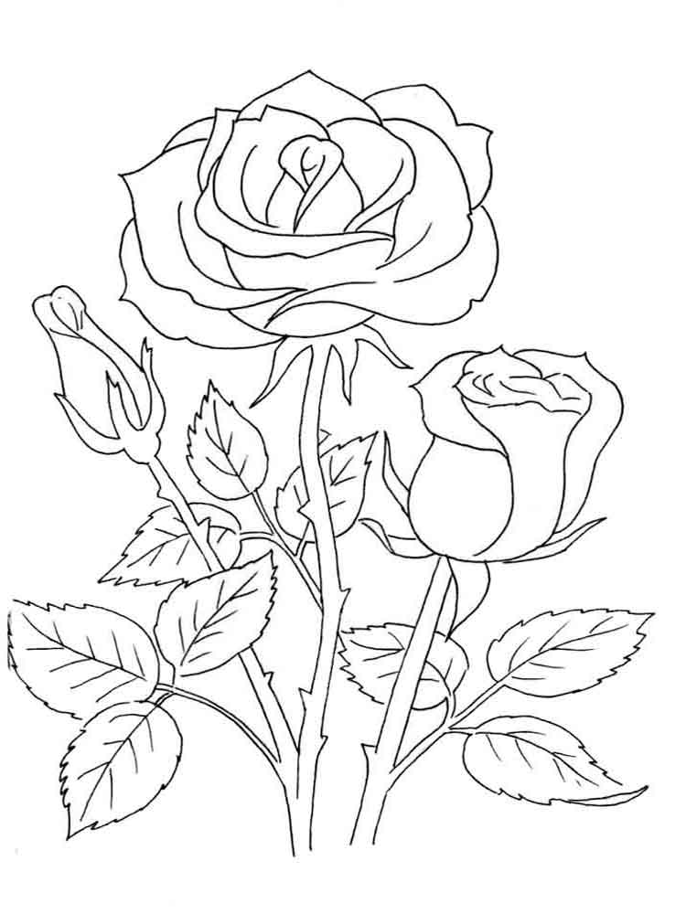 Rose coloring sheet flower coloring pages