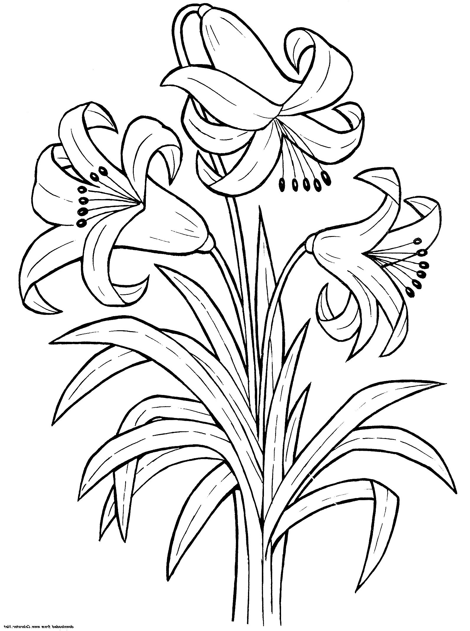rose coloring sheet flower coloring pages printable lily flower coloring pages k5 worksheets coloring sheet rose pages coloring flower