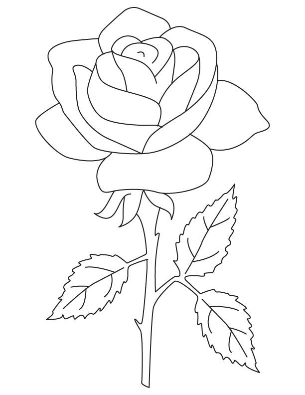 rose coloring sheet flower coloring pages rose rose rose coloring page rose coloring pages flower coloring flower rose pages coloring sheet