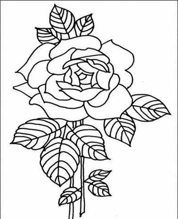 rose for coloring amazing red rose flower coloring page kids play color coloring rose for