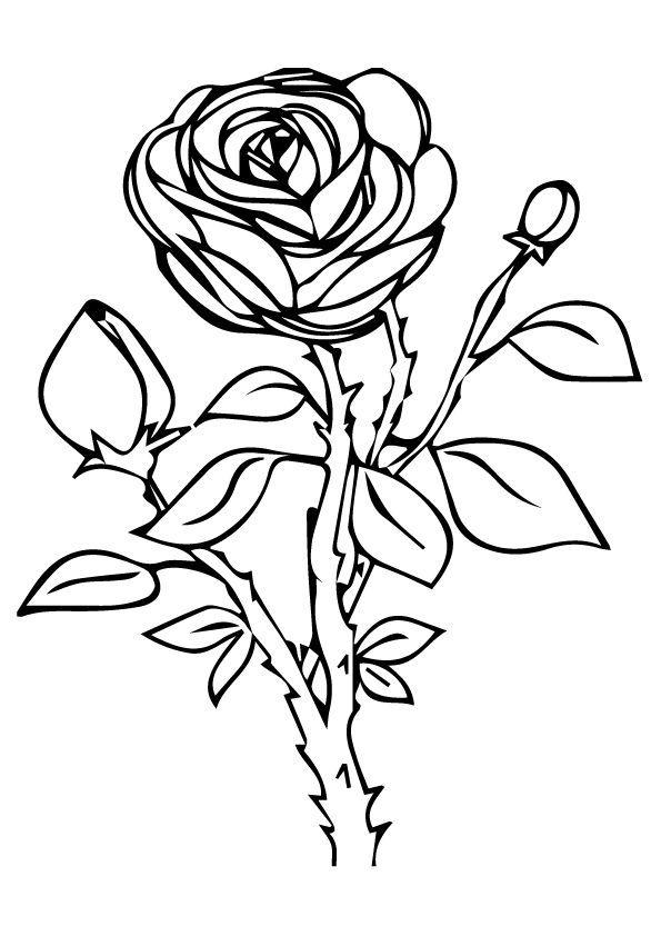 rose for coloring free printable rose coloring pages rose coloring pictures coloring for rose