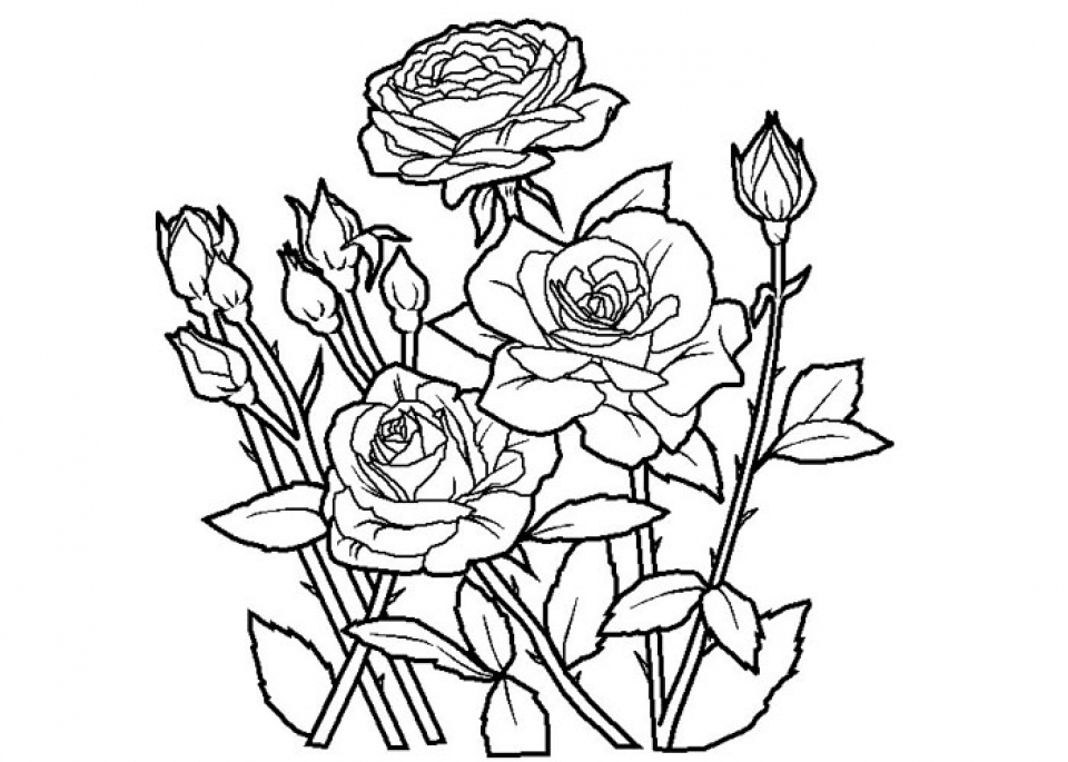 rose for coloring get this free roses coloring pages for adults to print 16629 coloring for rose