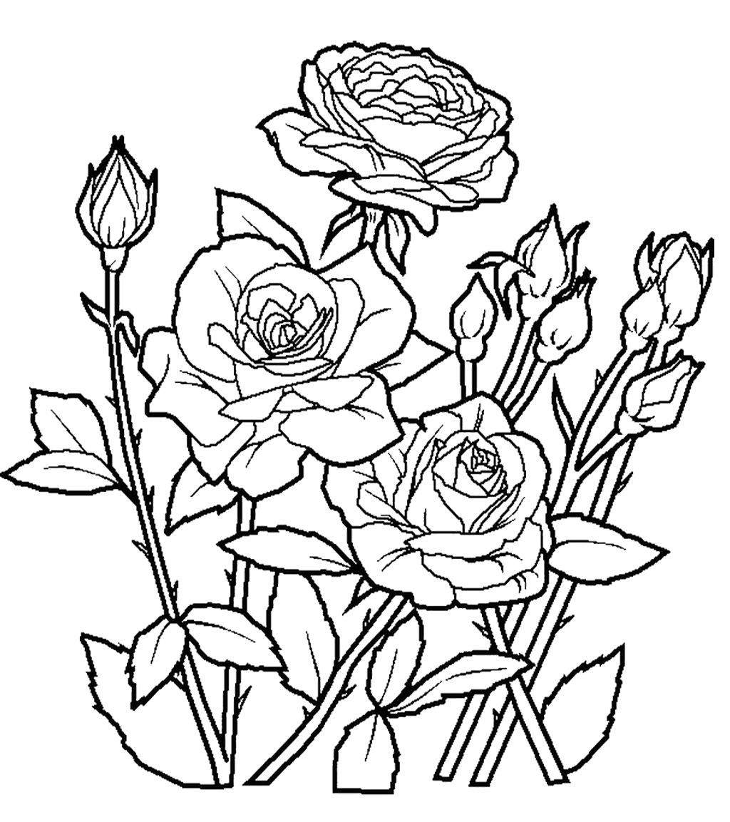 rose for coloring rose garden drawing at getdrawings free download rose for coloring
