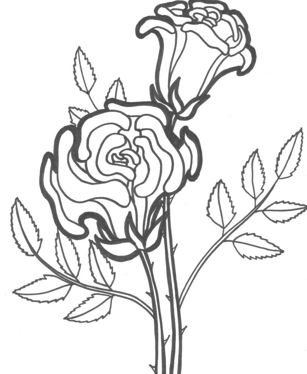 rose to color garden of rose coloring page download print online rose to color