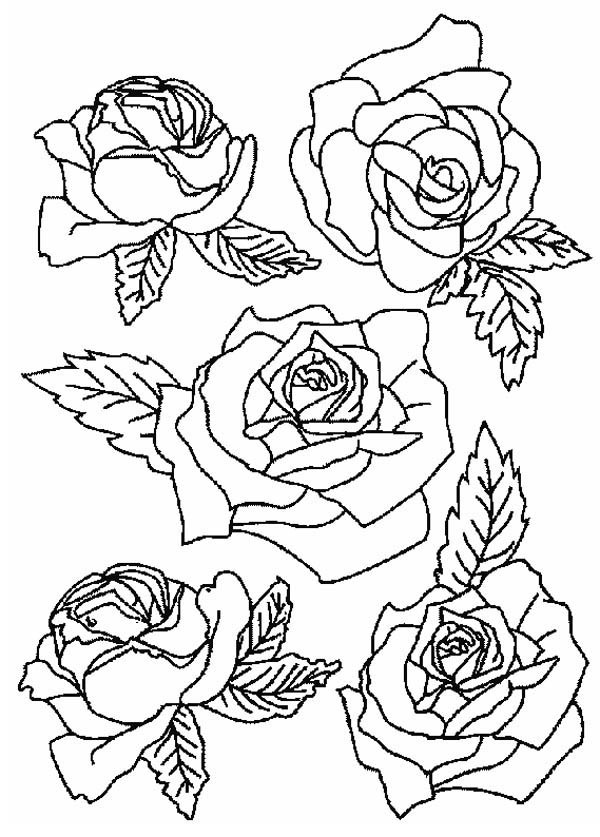 rose to color picture of roses for flower bouquet coloring page color luna rose color to