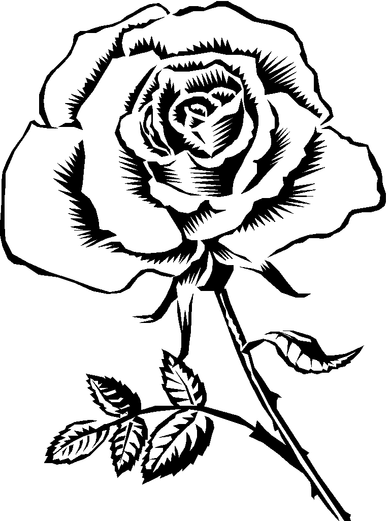 rose to color rose coloring page free printable coloring pages rose to color