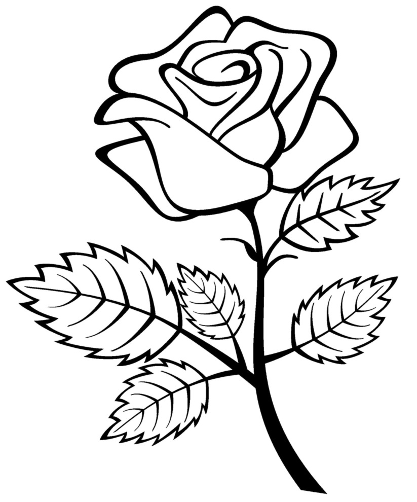 rose to color rose flower for beautiful lady coloring page download color rose to