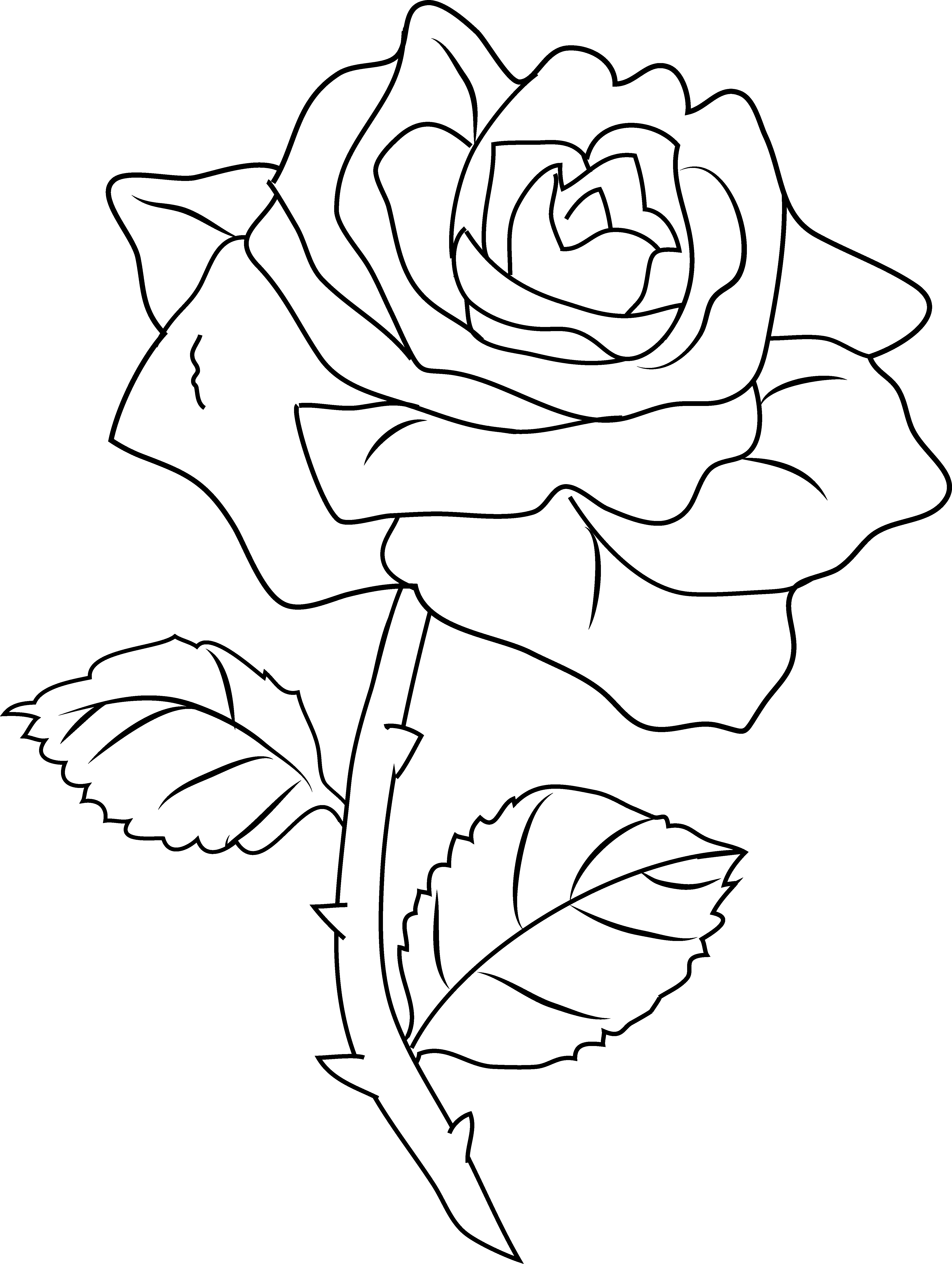 rose to color roses coloring pages to download and print for free rose to color