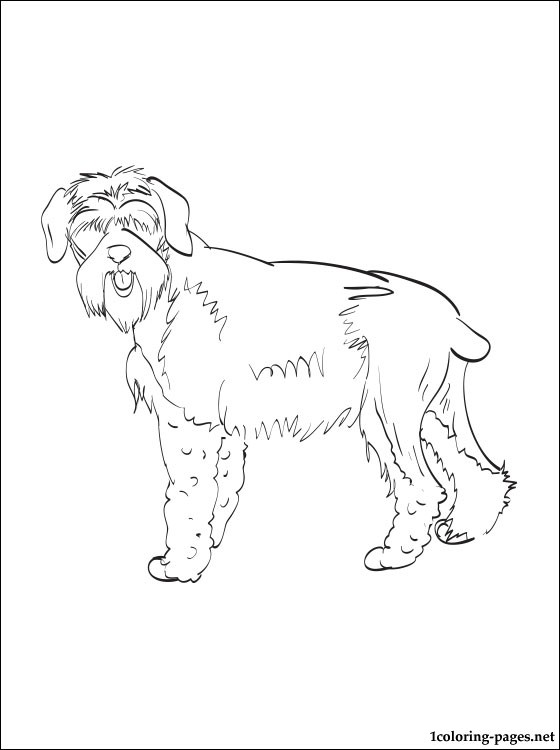 schnauzer coloring pages draw a schnauzer schnauzer step by step drawing sheets schnauzer pages coloring