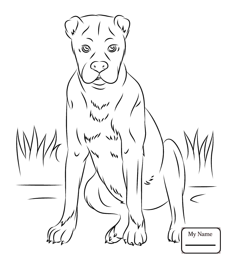 schnauzer coloring pages schnauzer drawing at getdrawings free download schnauzer pages coloring